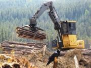 В Миссури откроют школу по заготовке лесоматериалов