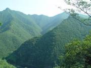 Объемы тоговли лесом в Китае увеличились