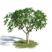 Породы деревьев будут распознавать при помощи лазера