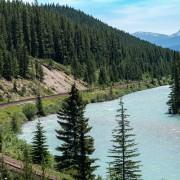 План по защите карибу в канадской Альберте негативно повлияет на лесную промышленность