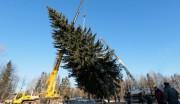 Подготовка к проведению гланой новогодней елки России