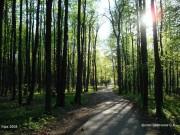 Брянские лесоводы рассказали об итогах реализации Года экологии в первом полугодии