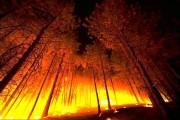 Профилактические работы для недопущения лесных пожаров активно ведутся в Чувашии