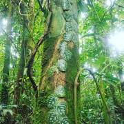 Бразилия откроет доступ к 860 тысячам акров охраняемых амазонских лесов