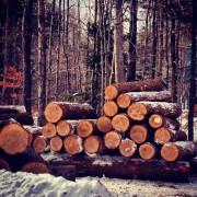 Австралийская организация по защите окружающей среды объявила о штрафах за вырубку в охраняемых зонах