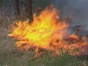 В России действует 183 лесных пожара на территории 17,7 тыс. гектаров