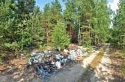 В лесах Ярославского региона ликвидируют незаконные свалки