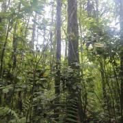 Понизились темпы вырубки леса в Висконсине