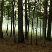 Global Forest Partners продает сосновую планатацию в Новой Зеландии