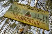 В лесах Курска введён особый противопожарный режим