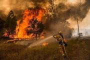 Для тушения лесных пожаров в США на протяжении 2017 года потратили 2 миллиарда долларов