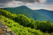 Тропические леса выделяют углекислый газ