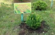 В Адыгее высадили 500 саженцев редкого самшита колхидского