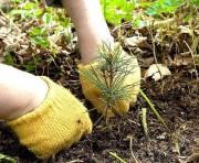 На протяжении Года экологии в России восстановлено 800 тыс. гектар лесов