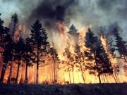 В лесах Челябинской области введён особый противопожарный режим