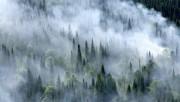 Общая площадь лесных пожаров на территории ДФО достигла 160 гектаров