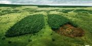 В прошлом году WWF и группа Mondi добились значительных результатов в сохранении экологически ценных лесов