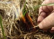 """""""Оборонлес"""" в очередной раз предупредил о запрете поджога сухой травы"""