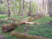В Курском регионе обсудили проблемы незаконной заготовки древесины
