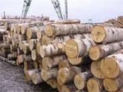 Основа развития страны в новом году - деревообработка березы