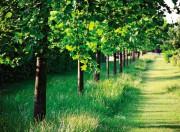 Значение лесных насаждений в уменьшении риска наводнений и защите водных магистралей