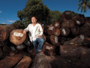 Китай издаст новые руководящие принципы относительно уменьшения заготовки леса