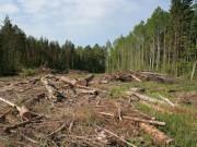 Россия и Канада признаны мировыми лидерами по уничтожению леса