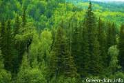 Восстановление лесных насаждений в Канаде