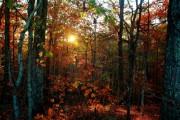 Леса Гессена: предприятия лесной промышленности должны быть сертифицированы