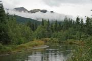 Опубликован план по управлению лесом Аляски