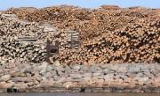 Экспорт древесины из Швеции в регион Ближнего Востока составил $797 миллионов
