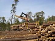 Эффективность лесных комплексов возрастет благодаря кластерному подходу