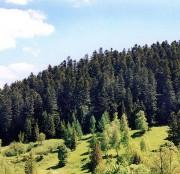 Преимущества лесной промышленности