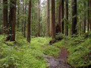 Лесной потенциал России и его развитие