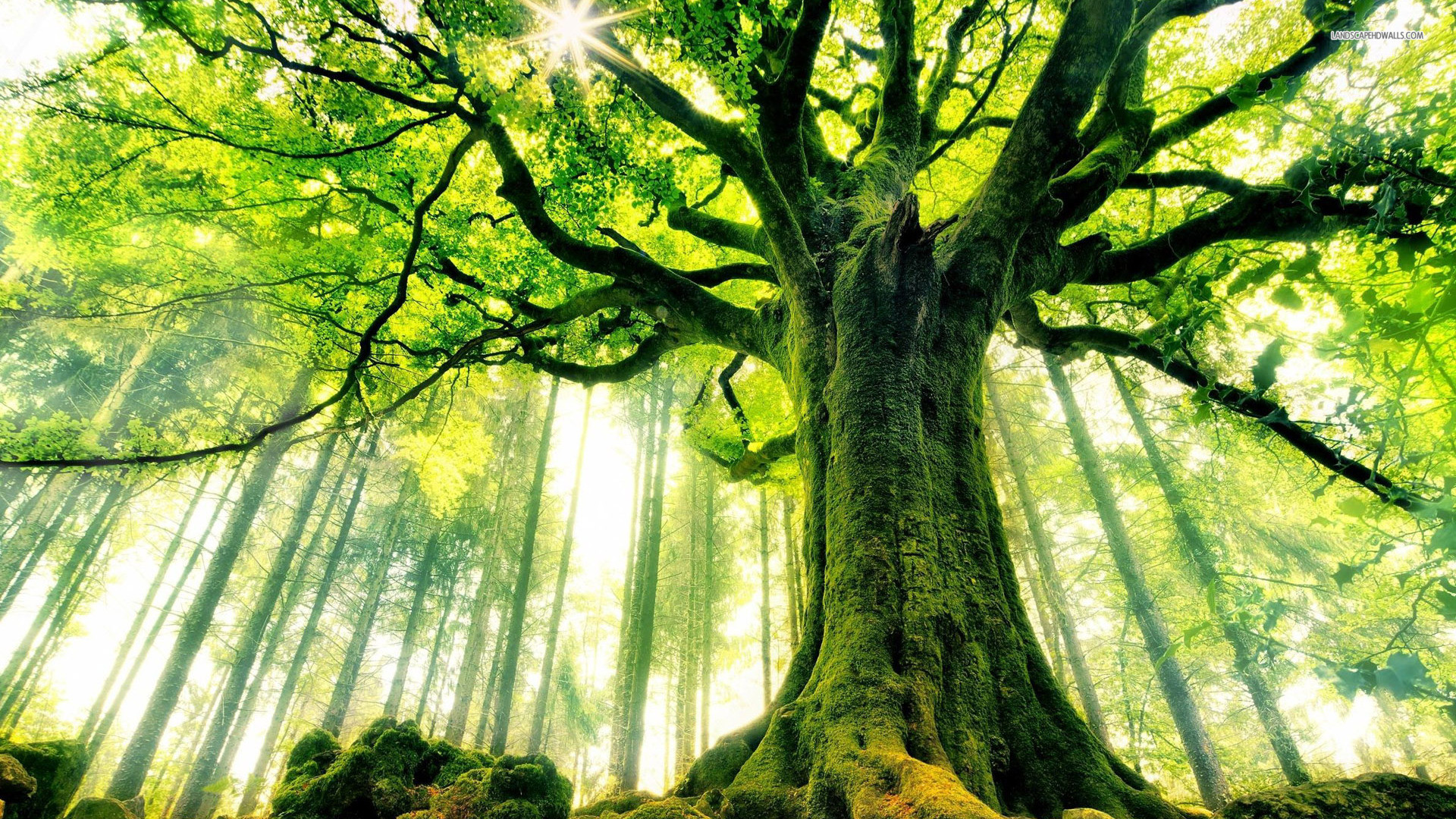 Сколько деревьев на земле
