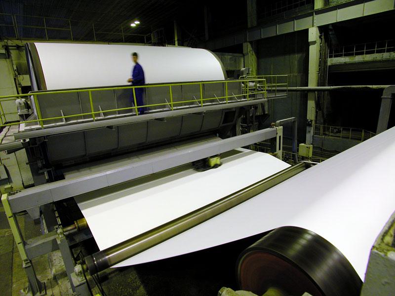 Из какого дерева делают бумагу
