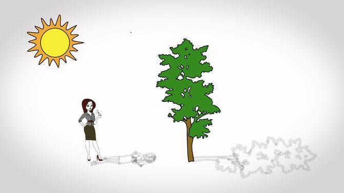 Как определить высоту дерева